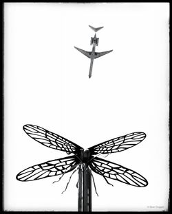 Flying_Insects