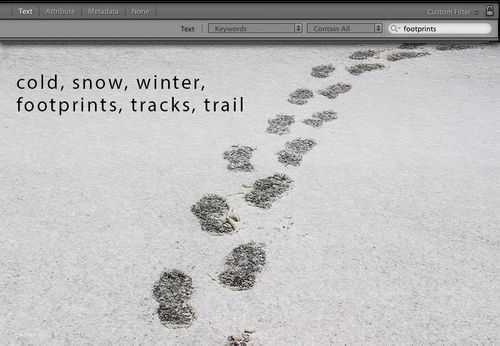 Footprints-in-the-snow-w