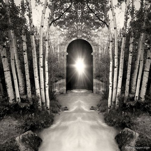 Forest_Portal_900px